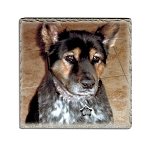 Pet Photo on Tuscany Marble Tile
