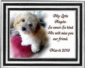 Pet Memorial Plaque for Lawn & Wall, Color Photo