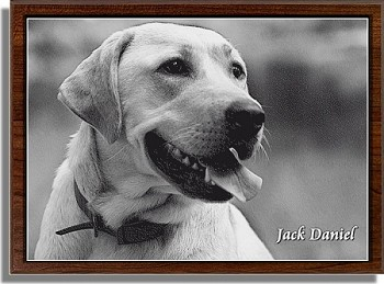Pet Photo Etched in Marble with Frame 10.5 x 13